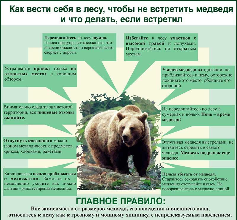 фотографии, выживание в дикой природе встреча с медведем расскажите